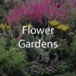flower garden photos